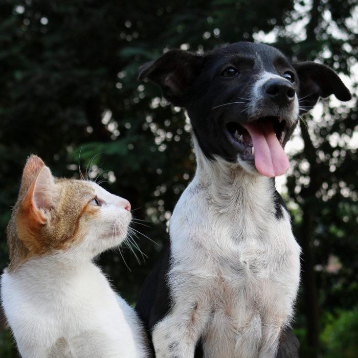 Särö Hund & Katt